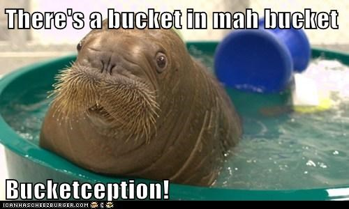 inside,yo dawg,Inception,bukkit,bucket,walrus,lolrus