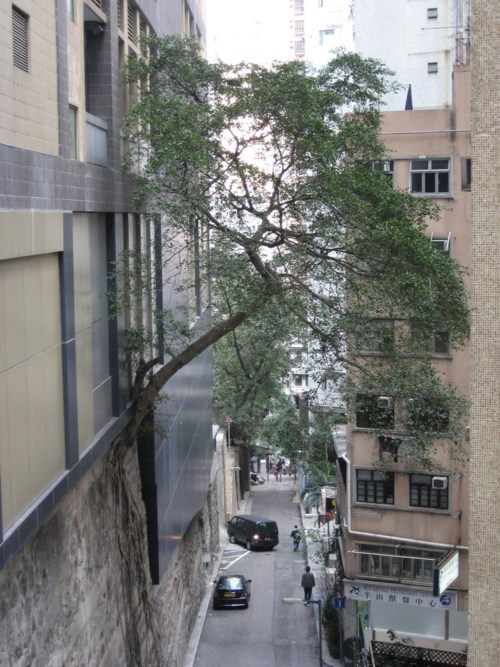 growth,get down from there,you are drunk,cityscape,tree