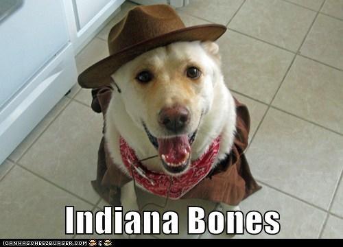 costume dogs labrador Indiana Jones hat - 6789318400