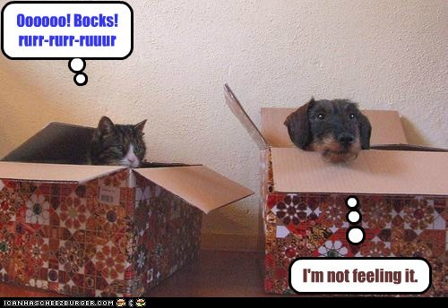 dogs cardboard boxes purr what breed Cats