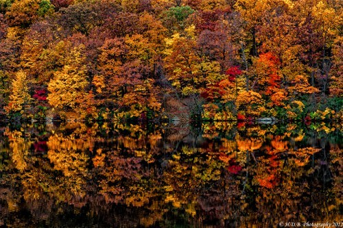 double Forest reflection landscape pretty colors lake fall - 6789558528