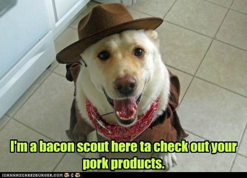I'm a bacon scout here ta check out your pork products.