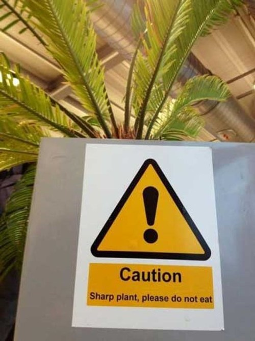 warning,sign,engrish,sharp,plant