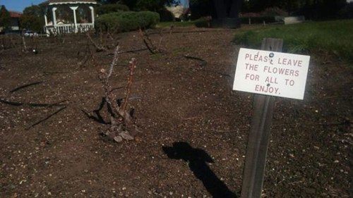 ouch,sign,flowers,irony