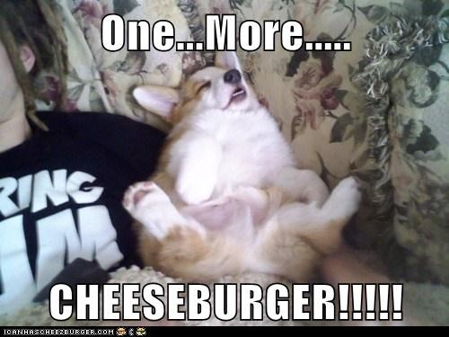 cheesburger fat lazy couch corgi food - 6790122240