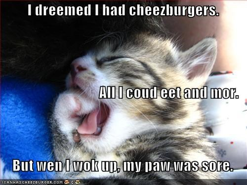 cheezburger,cute,dream,kitten,lolcats,lolkittehs