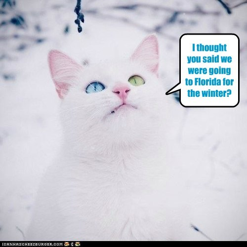 I thought you said we were going to Florida for the winter?