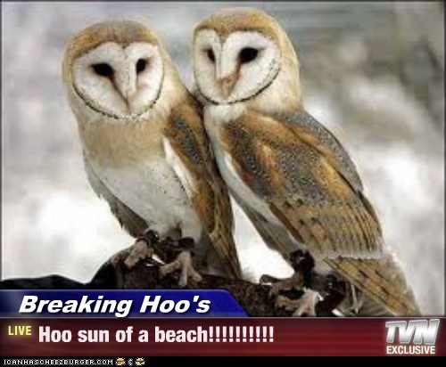 Breaking Hoo's - Hoo sun of a beach!!!!!!!!!!