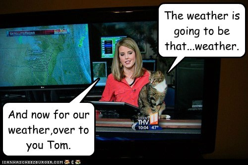 news,Local News,captions,weather,TV,weatherman,Cats