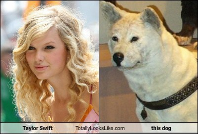 taylor swift Music TLL dogs funny animals - 6791323392