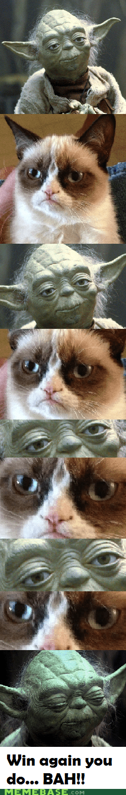 staring constest,yoda,Grumpy Cat,tard