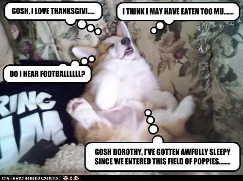 dogs food coma thanksgiving couch corgi sleeping - 6791670272