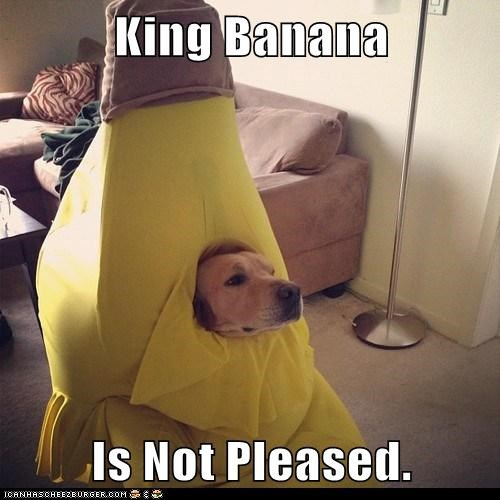 costume dogs king banana not pleased what breed - 6791783168