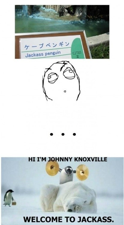johnny knoxville,zoo,jackass,penguin
