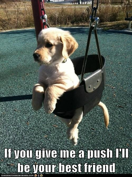 dogs puppies best friend push me swing golden retriever - 6792082176