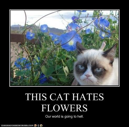 THIS CAT HATES FLOWERS