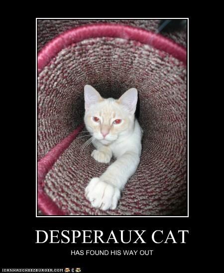 DESPERAUX CAT