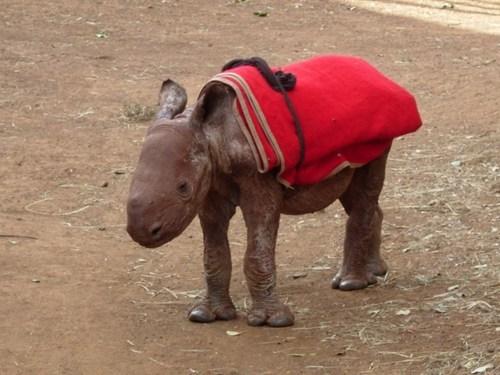puberty blankets Awkward rhinoceroses rhinos squee - 6792479232