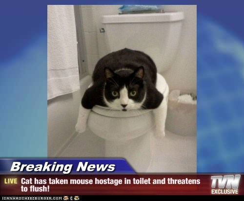 Breaking News - Cat has taken mouse hostage in toilet and threatens to flush!