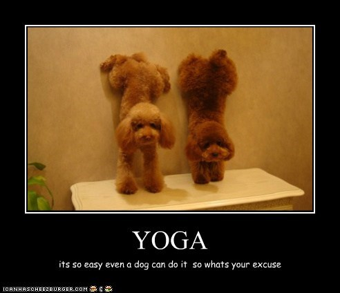 YOGA its so easy even a dog can do it so whats your excuse