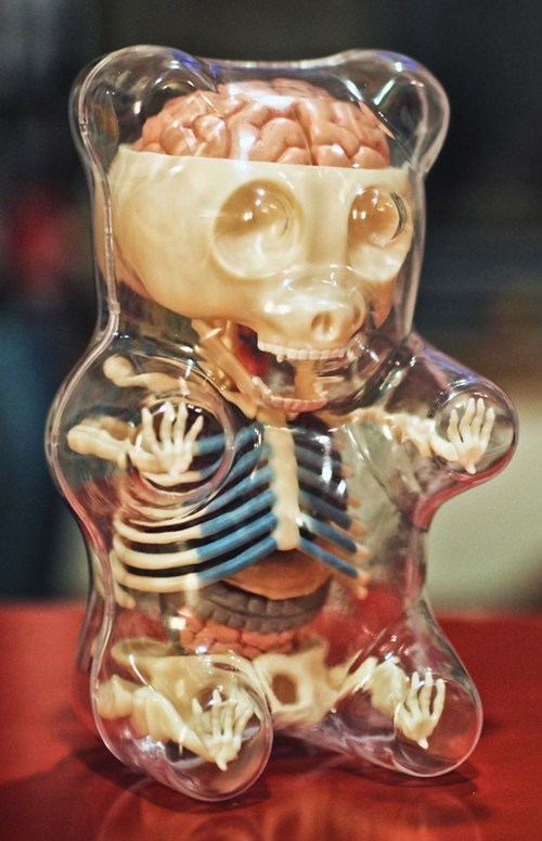 see thru gummy bear insides bones skeleton organs transparent