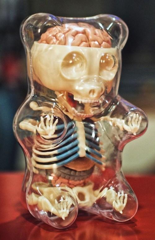 see thru gummy bear insides bones skeleton organs transparent - 6792815104