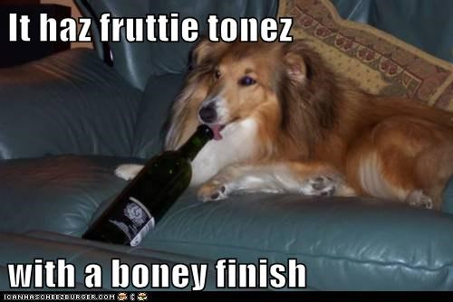 drinking dogs bottle of wine drunk tongue wine shetland sheepdog