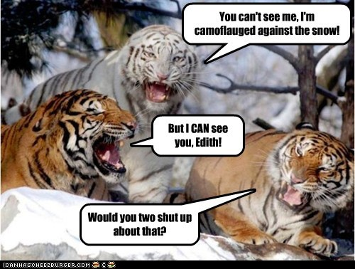 camouflage,arguing,see,snow,tigers,white tigers