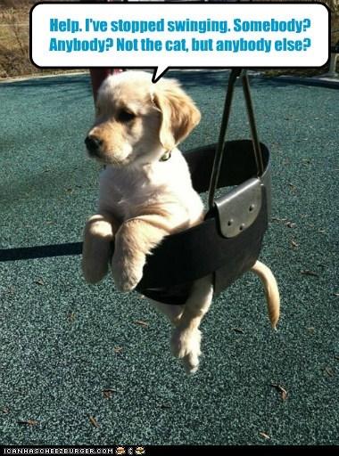 dogs puppies help swing push golden retriever - 6793224192