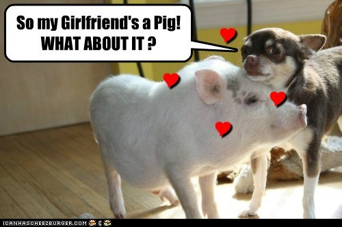 dogs,girlfriend,chihuahua,love,pig,dating