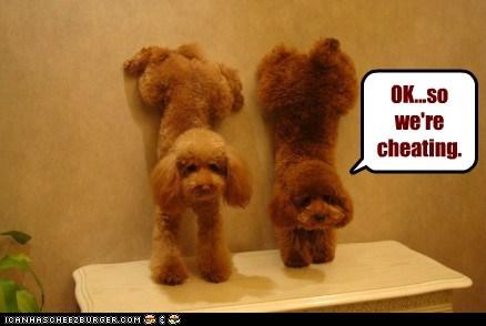 Cheezburger Image 6793272320