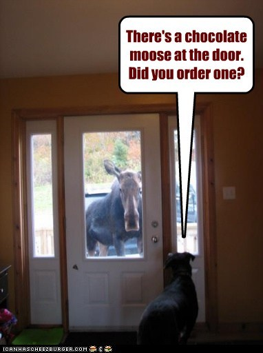 There's a chocolate moose at the door. Did you order one?