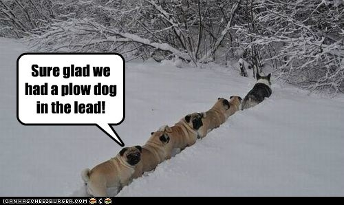 Sure glad we had a plow dog in the lead!