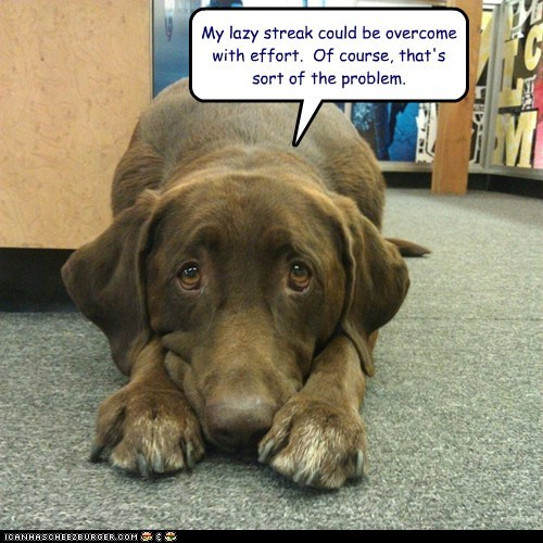 motivation dogs lazy resolution what breed