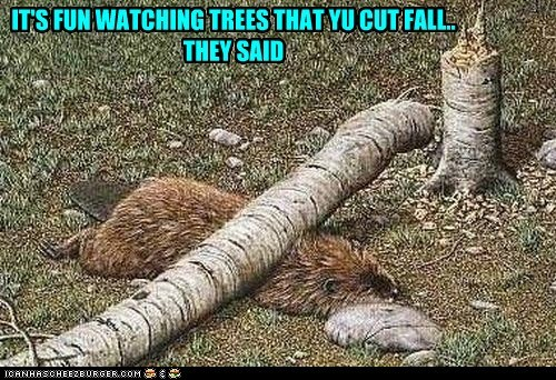IT'S FUN WATCHING TREES THAT YU CUT FALL.. THEY SAID