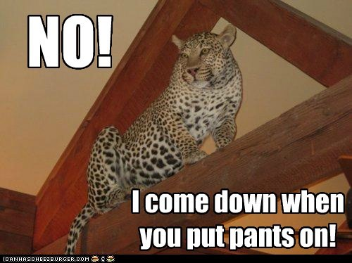 NO! I come down when you put pants on!