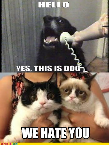 call me maybe,hello this is dog,Grumpy Cat,tard