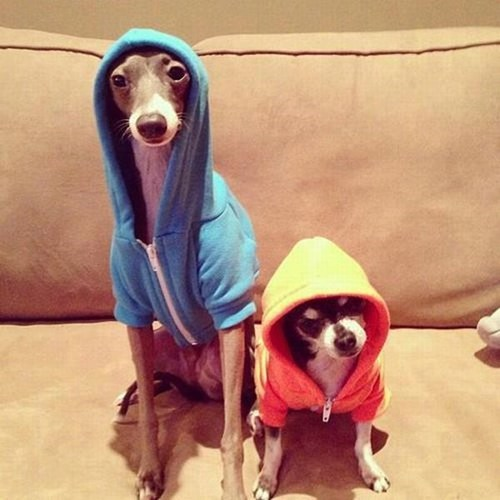 dogs,hoodies