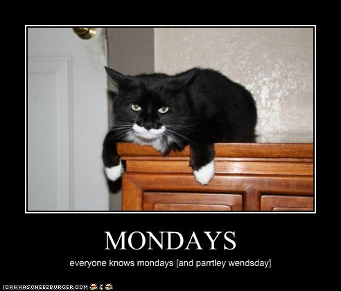 MONDAYS everyone knows mondays [and parrtley wendsday]