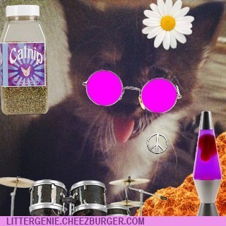 photobomb winners cat snaps contest litter genie - 6795425536