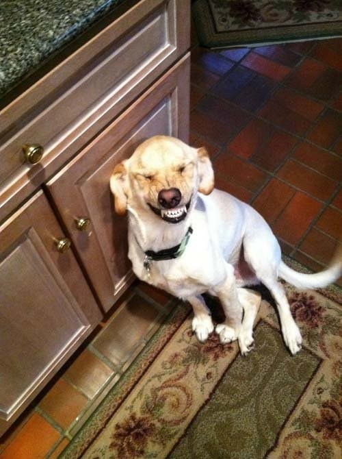 pet smile dog say cheese - 6795437056