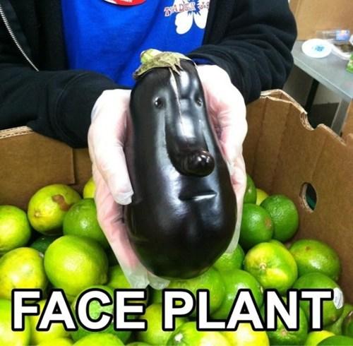 puns,eggplant,face plant