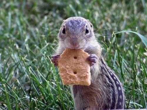 sharing chipmunks crackers noms squee - 6795570944