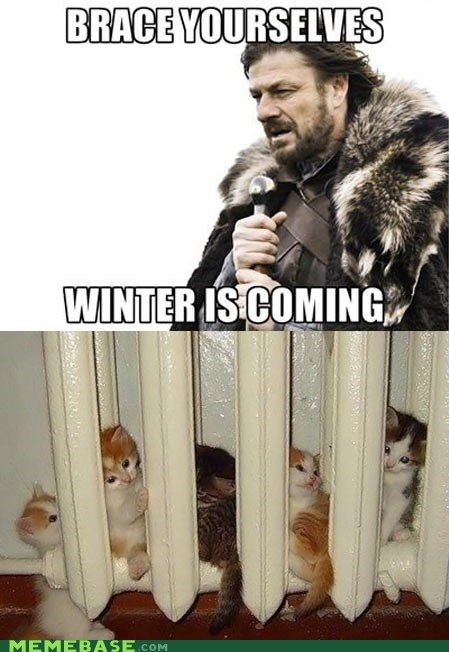 brace yourselves winter Cats - 6795663616