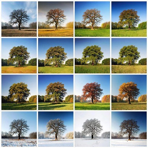 photography instagram landscape tree