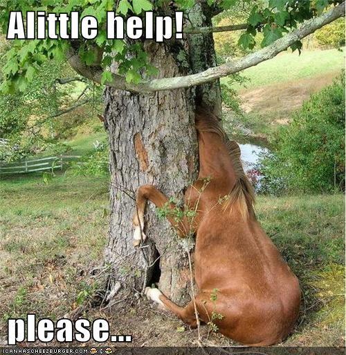 Alittle help!  please...