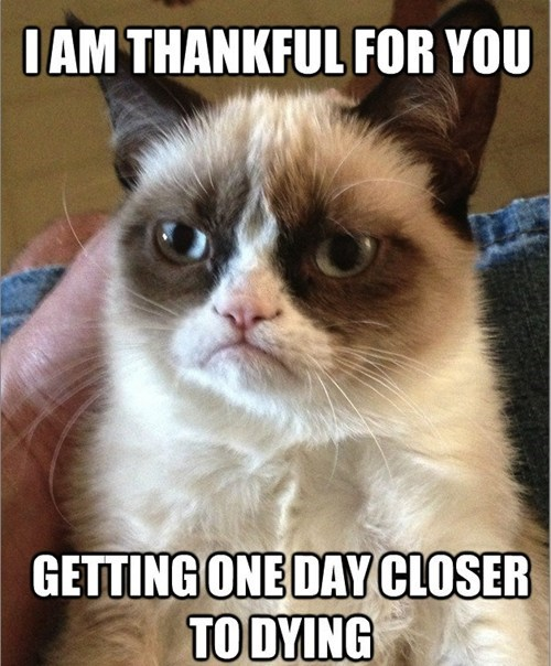 thanksgiving,thankful,giving thanks,Grumpy Cat,tard