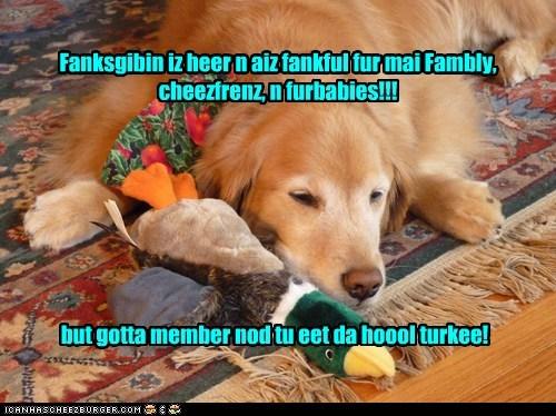 Cheezburger Image 6795804928