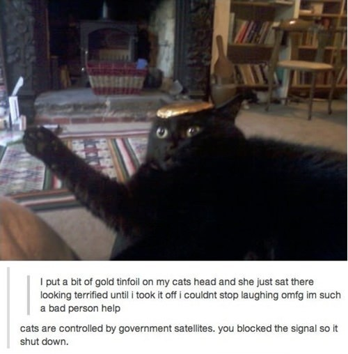 government signal conspiracy lolwut strange blocked Cats shutdown tinfoil