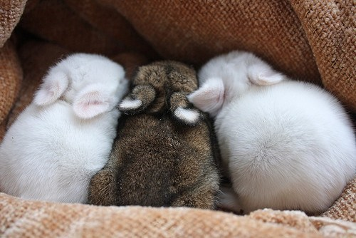 Bunday Babies snuggling rabbit bunny - 6795958016